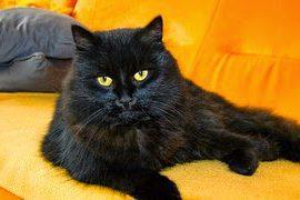 cat-447362__180-e1471975754257